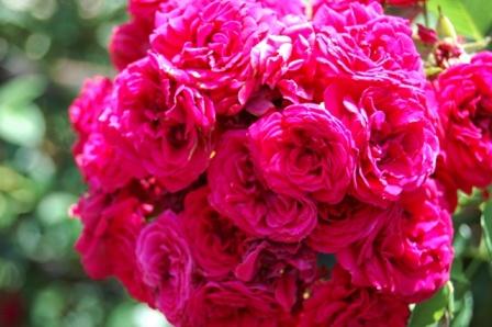 roseball1.jpg